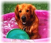 Cleo in her pool