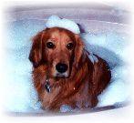 Cleo taking a bath
